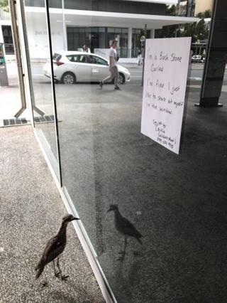 Gelen geçenlere kuşun sadece kendisini seyretmekten hoşlandığını anlatan not