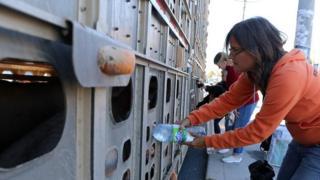 豚に水をやる、動物の権利保護活動家アニータ・クラインチ氏