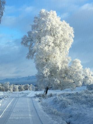 Snow at Invergarry