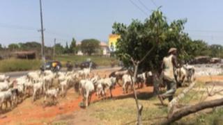 Fulani makiyaya