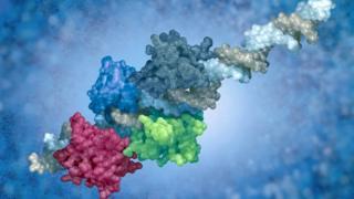 Complejo proteínico de ADN