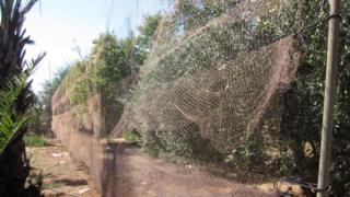 Kıbrıs'taki kuşlar bu ağlarla avlandı