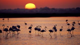 Болота в Национальном парке Доньяна в Андалусии страдают от незаконной добычи воды