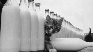 A cat and some milk