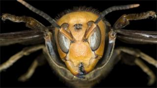 Insect close-up (Image: Science Photo Library)