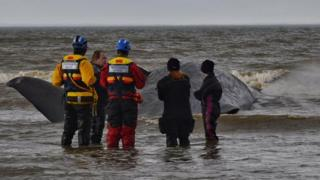 Rescue workers with stranded whale