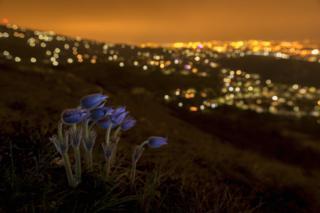 Goodnight, Budapest by Zsolt Varanka