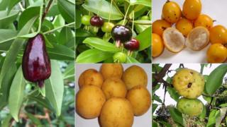 Frutas brasileñas