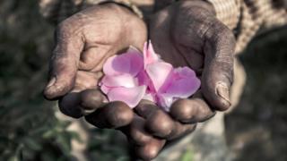 Petals held in hands
