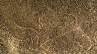 This undated handout picture released by Diputacion Foral de Bizkaia on 13 October 2016 shows cave engravings representing horses and goats, in the Armintxe cave in the Basque village of Lekeitio