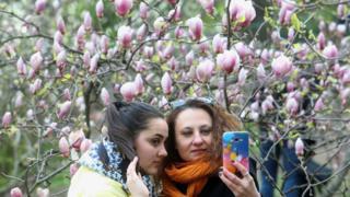 Люди фотографируются у магнолий в ботаническом саду имени А. Фомина в Киеве