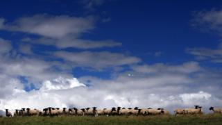Sheep farm in Wales