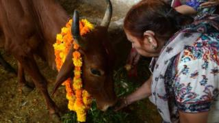 Aba Hindu benshi bafata inka nk'ibirenwa bitagatifu