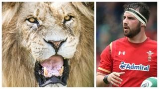 Lion and Scott Baldwin