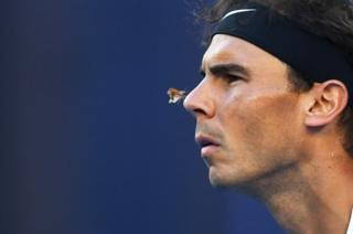 A moth lands on the nose of Rafael Nadal.