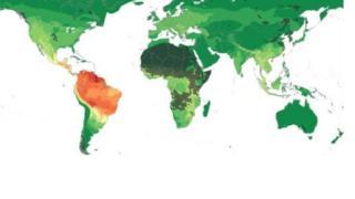 Картадагы кызыл жана кызгылтым сары түстөгү тактар глобалдык эпидемиянын потенциалдуу отурукташкан жерлери.