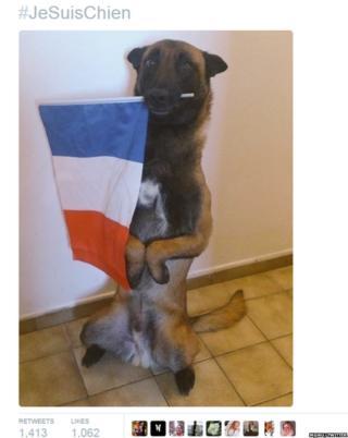 警察犬「ディーゼル」の殉死を悼んで自分のペットの写真を投稿する人が相次いだ