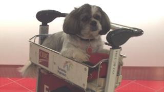 Brenda Lee-Lovell's dog in an airport trolley