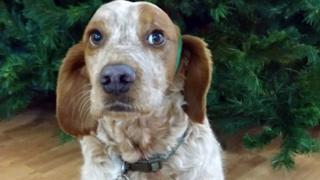 William, dog at Invernevis House