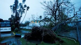 Trees fall after Hurricane Earl hits, in Belize City, Belize August 4, 2016.