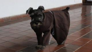 Ченець Кармело, болівійський пес