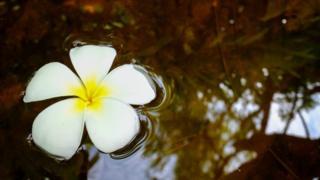 Flor na água