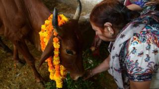 Pek çok Hindu için inekler kutsal hayvanlar
