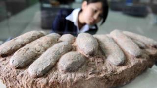 Çin'de bol miktarda bulunan fosiller, dünya çapında koleksiyoncuların ilgisini çekiyor