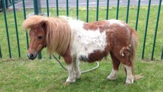 Pony handed in at Wokingham Police Station