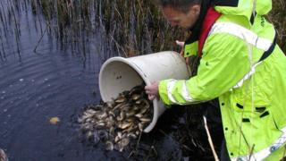 Fish being released into a river (Image: Environment Agency)