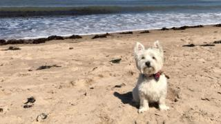 Casper in North Berwick