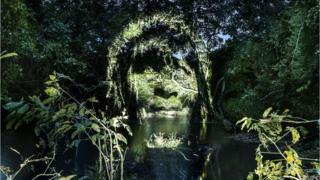 Обличчя, спроектоване на ліс