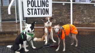英国英格兰的坎布里亚一投票站外三只狗一起随主人前往投票