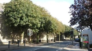 Trees on Tenby's South Parade