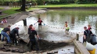 Fish rescuers