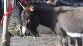 Donkeys, 14 December 2017