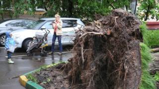 Поваленное дерево и женщина с ребенком