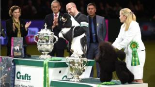 Owner Jason Lynn with Afterglow Miami Ink the American Cocker Spaniel (centre), who has been crowned Best In Show during day four of Crufts 2017 at the NEC in Birmingham