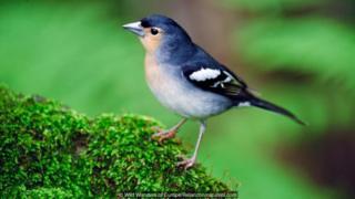 Birds can reach islands by flying