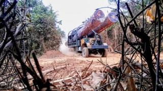 EIA nói hơn 300.000 mét khối gỗ đã được xuất lậu từ Campuchia từ tháng 11.
