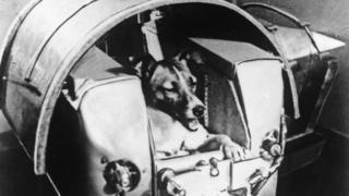 Cadela Lika dentro de capsula que seria enviada ao espaço.