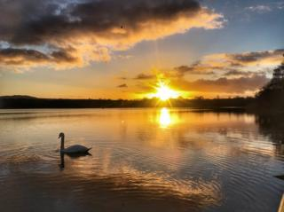 Swan at Castle Loch in Dumfries and Galloway at sunset