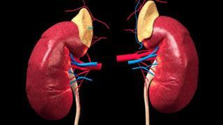 人體腎臟立體動畫