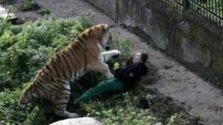 An onlooker took this photo of the tiger's attack