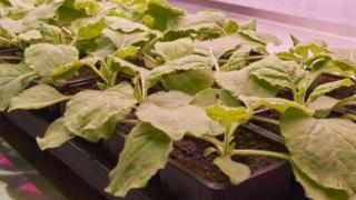 Las plantas que se usaron para hacer el experimento.