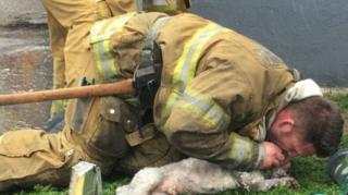 นักดับเพลิงสหรัฐฯ ช่วยผายปอดตูบน้อย