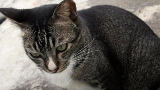बिल्ली (फ़ाइल फ़ोटो)