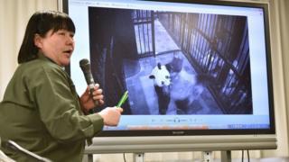 上野動物園教育普及課長金子美香子向媒體展示真真產後叼著幼崽的照片(12/6/2017)