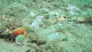 Damaged reef