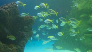 Fish in an aquarium